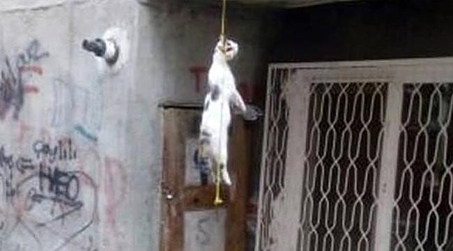Boğazına ip bağlanan kediyi asarak öldürdüler