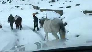 Rize'de donmak üzere olan atlar kurtarıldı