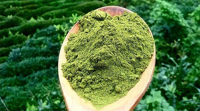 Rizeli kardeşler Japon Matcha çayını Rize'de üretiyor