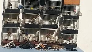 Rize'de kaçak avcılık yapan kişiye 10 bin lira para cezası