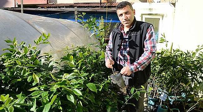 Rize'de yerli tohum seferberliği başladı