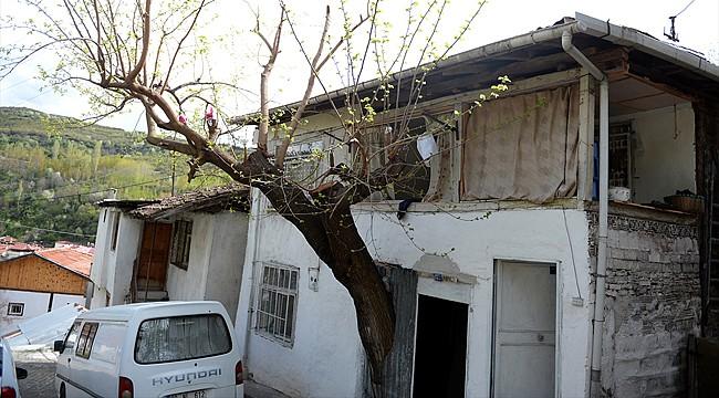 Evin içinde dut ağacı büyüyor