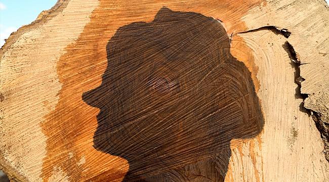 Kesilen ceviz ağacının gövdesinde kadın silüeti çıktı