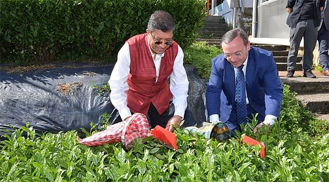 Hindistan'ın Türkiye Büyükelçisi Rize'de çay topladı