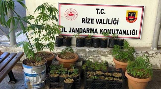 Rize'de bahçesinde kenevir yetiştiren kişi yakalandı