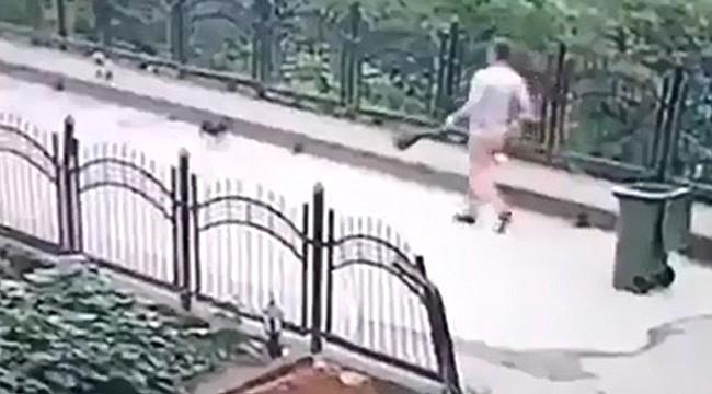 Rize'de yavru köpeği dereye atan işçiye para cezası