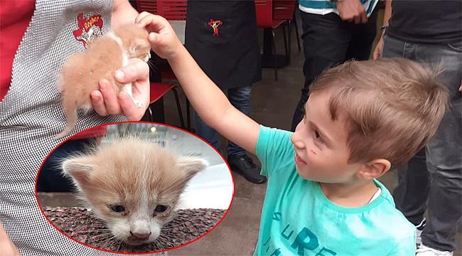 Rize'de havalandırma boşluğuna düşen yavru kediyi işyeri sahibi kurtardı