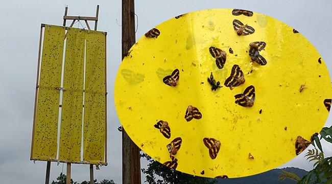 Vampir kelebekler için sarı ışıklı çözüm