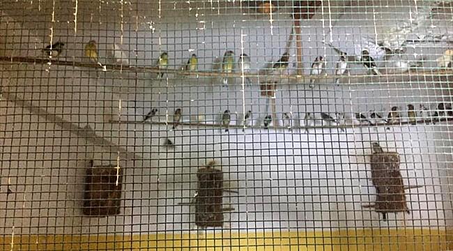 Rize'de koruma altındaki kuşları besleyen kişiye para cezası