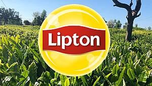 Lipton yaş çay taban fiyatını 3 TL olarak belirledi