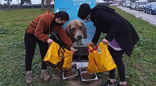 Rize'de kadınlar sokak hayvanları için seferber oldu