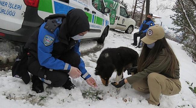Rize Polisinden sokak hayvanlarına sıcak dokunuş