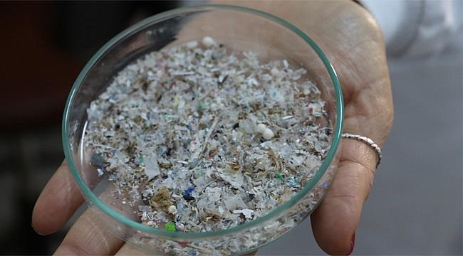 Denize atılan plastikler balık türleri için tehlike yaratıyor