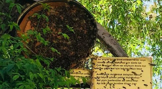 Rizeli bakkal sokak ortasındaki ağaca arı kovanı kurdu