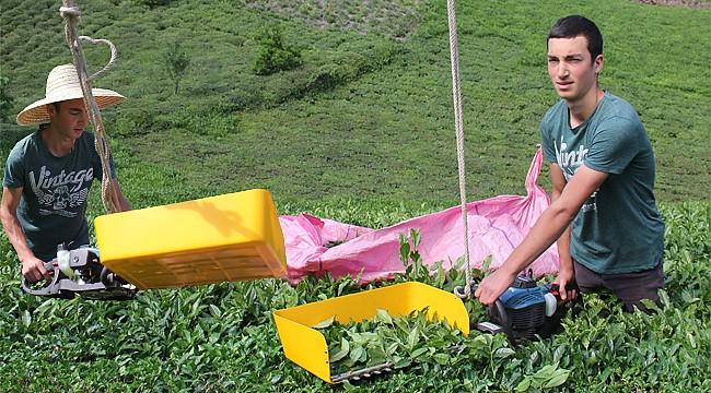 Ardeşenli genç yorulmadan çay toplamak için ilginç bir yol buldu
