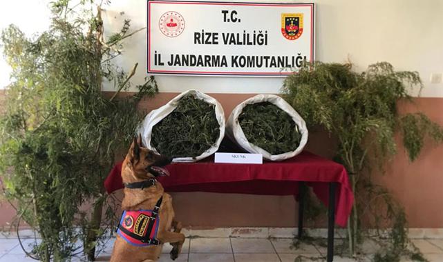 Rize'de 12 kilo uyuşturucu yakalandı