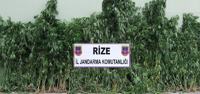 İkizdere'de uyuşturucu operasyonu